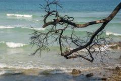 被归档的树的分支去海 免版税库存图片