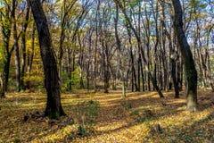被忘记的森林道路秋天, 11月,报道用五颜六色的叶子 库存照片