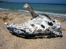 被忘记的海运鞋子 免版税库存照片
