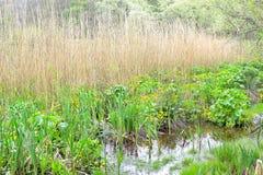 被忽略的池塘 免版税库存照片