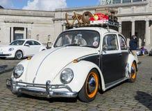 被恢复的老时尚VW甲虫 库存图片