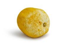 被感染的柠檬 免版税库存图片