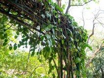 被成拱形的入口,Mother公主纪念公园,曼谷,泰国 库存图片