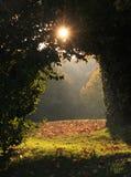 被成拱形的巷道在森林里,对晴朗的清除的看法 库存照片
