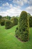 被截去的树篱修剪的花园被整理的树篱 库存照片