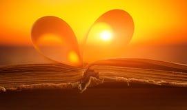 被打开的书关闭在日落背景 免版税库存照片