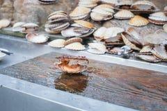 被打开的扇贝shellop用里面软体动物 图库摄影