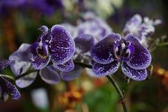 被打开的花将带来财富 免版税库存图片