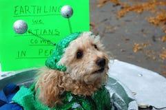 被打扮的狗 库存图片
