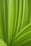 被打褶的绿色叶子 免版税库存图片