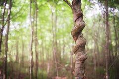 被打结的结构树 免版税库存图片