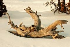 被扭转的停止的结构树 库存照片