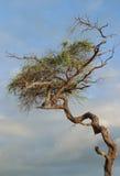 被扭转的结构树 免版税图库摄影