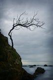 被扭转的结构树 库存照片