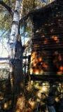 被扭转的结构树 库存图片