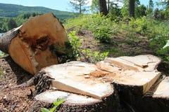 被折叠的树 库存图片