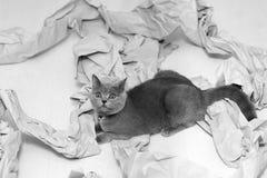 被折叠的纸张 免版税库存照片