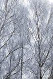 被拍摄的冬天森林 库存图片