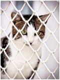 被拘留的猫(6) 免版税库存照片