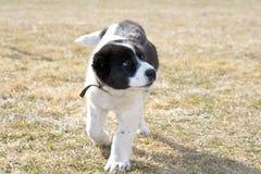 被指责的小狗 免版税图库摄影