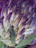 被按的三叶草花抽象 库存照片