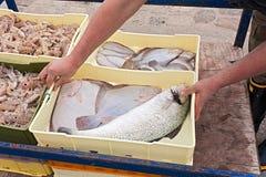 被捉住的条板箱新近地钓鱼 库存图片