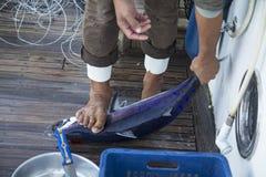 被捉住的金枪鱼 免版税图库摄影