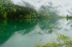 被捉住的雾森林山 库存照片