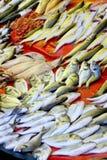 被捉住的鱼新近地销售额 库存图片