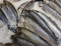 被捉住的鱼新近地 免版税库存图片