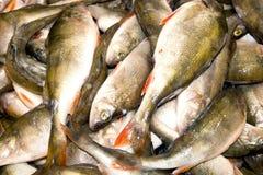 被捉住的鱼 库存图片