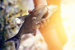 被捉住的鱼 图库摄影