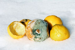 被损坏的柠檬 免版税库存图片