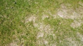 被损坏的草坪在冬天以后 股票录像