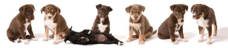 被排行的小狗  免版税库存图片