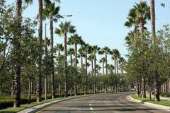 被排行的掌上型计算机街道结构树 免版税库存图片
