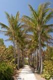 被排行的掌上型计算机路结构树 免版税库存照片