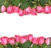 被排行的桃红色玫瑰上升白色 图库摄影