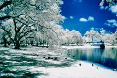 被排行的池塘结构树 免版税库存图片