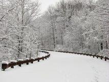 被排行的积雪的弯曲的路 库存图片