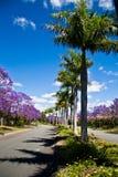 被排行的街道结构树 免版税库存图片