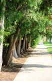 被排行的街道结构树 免版税图库摄影