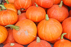 被排行的许多美丽的橙色南瓜 库存照片