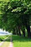 被排行的跟踪结构树 免版税库存照片