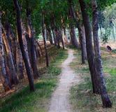 被排行的路径结构树 免版税库存照片