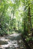 被排行的路径结构树 库存图片