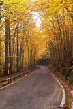 被排行的路结构树托斯卡纳 免版税库存照片