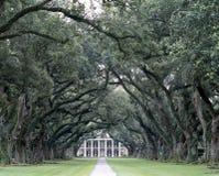 被排行的路结构树 库存图片