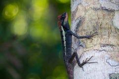 被掩没的多刺的蜥蜴 免版税图库摄影