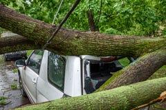 被摧毁的硕大下落的树和在其中一个击碎了停放的汽车由于严厉飓风莫斯科庭院中  库存图片